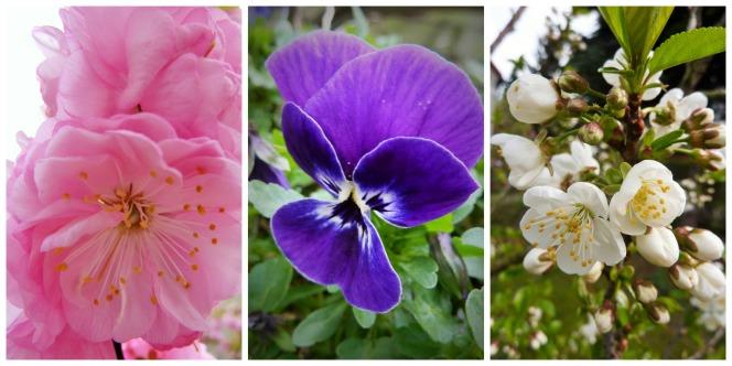 PicMonkey Collage_Blüten